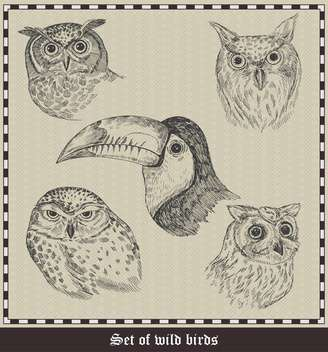 set of hand drawn birds illustration - бесплатный vector #135050