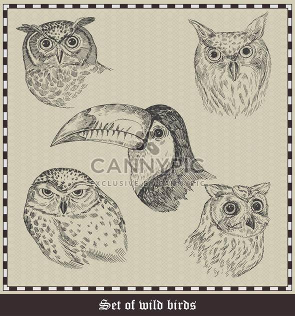 set of hand drawn birds illustration - Free vector #135050