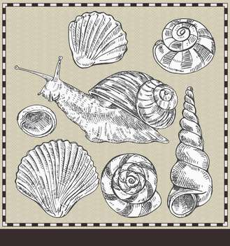 snail and shells in vintage style illustration - vector gratuit(e) #135180